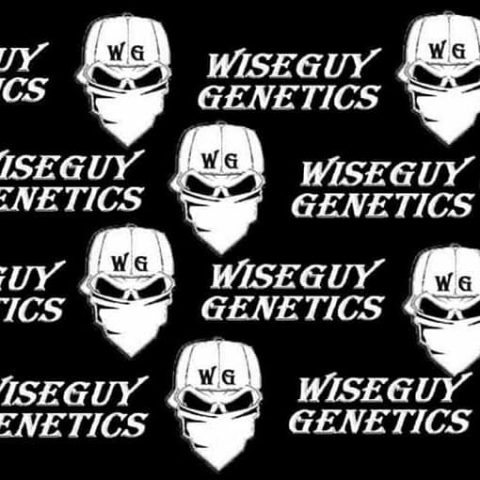 WiseGuy genetics